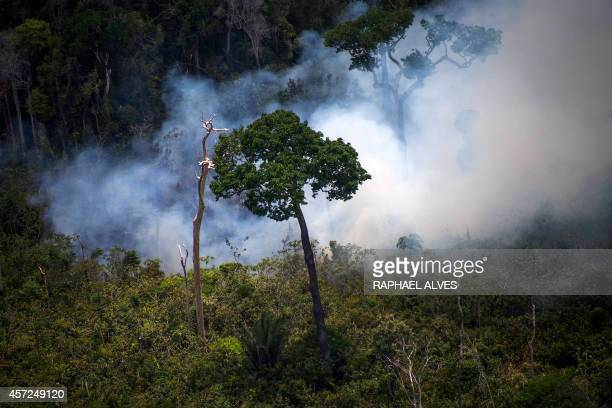View of a forest fire in the Amazon forest during an overflight by Greenpeace activists over areas of illegal exploitation of timber as part of the...