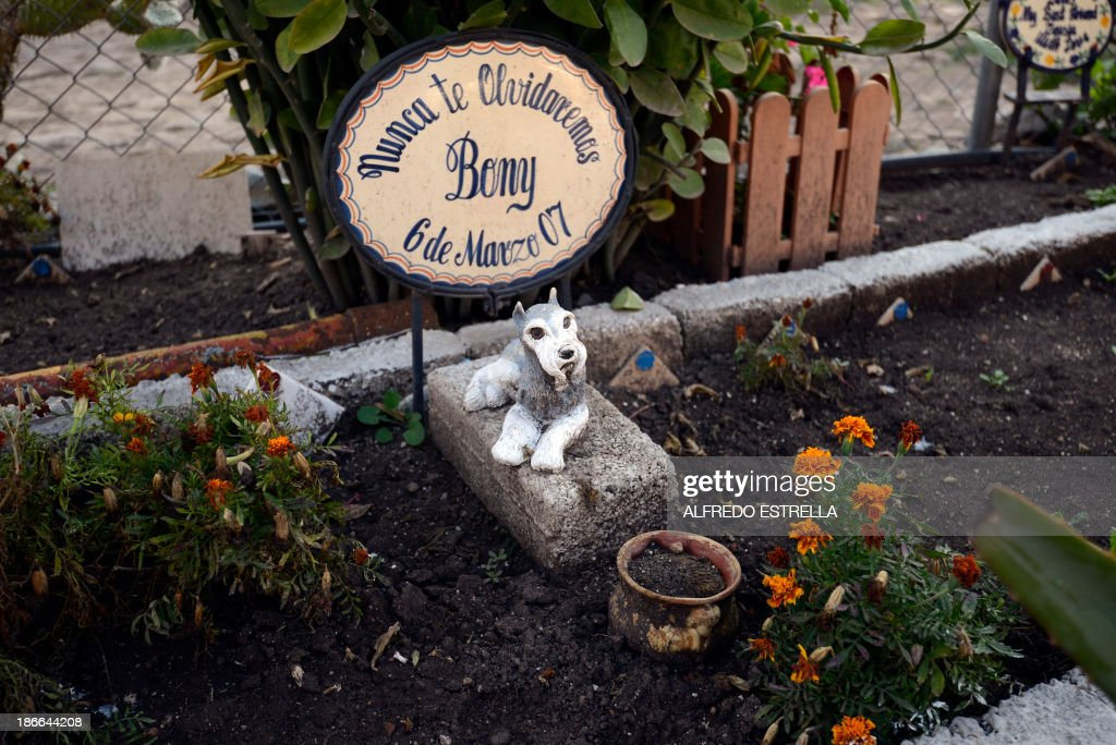 View of a grave at the pet cemetery in Corregidora, State of Queretaro, Mexico on November 1, 2013, a day before the commemoration of the Day of the Dead. The traditional Mexican holiday honors the dead and is celebrated annually.