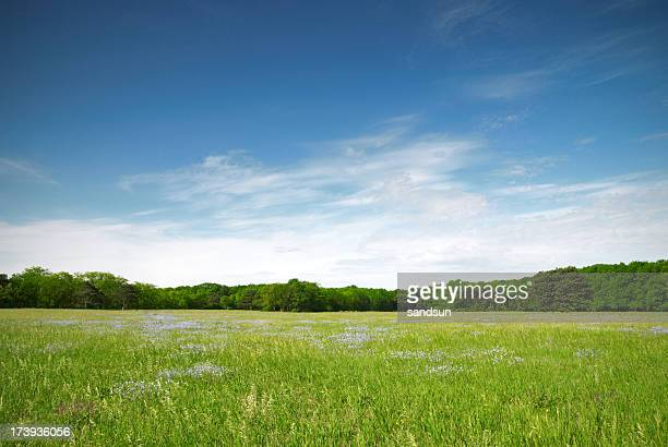 View of a green meadow with blue flowers on a sunny day