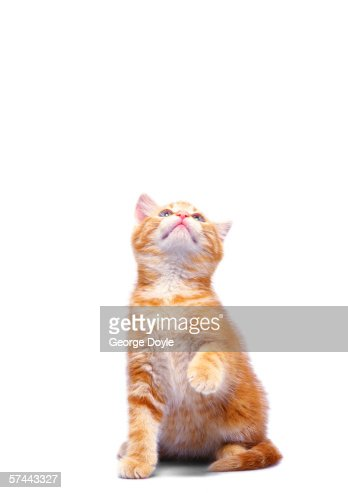 view of a kitten looking up : Stock Photo