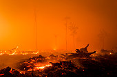 A view of a land as peatland forest is cleared by burning for a palm oil plantation at a company's grounds November 1 2015 in the outskirts of...