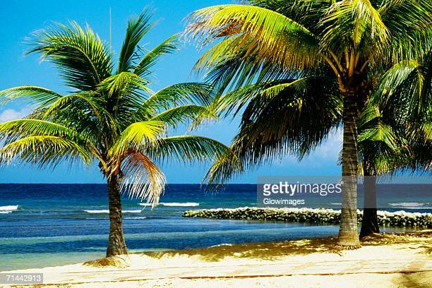 View of a man relaxing on a beach at Half Moon Bay Resort, Jamaica