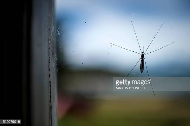 View of a mosquito through a window at a ranch near Puerto Natales Chilean Patagonia on February 19 2016 AFP PHOTO / MARTIN BERNETTI / AFP / MARTIN...