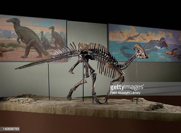 Hadrosaurid Stock Photos and Pictures | Getty Images