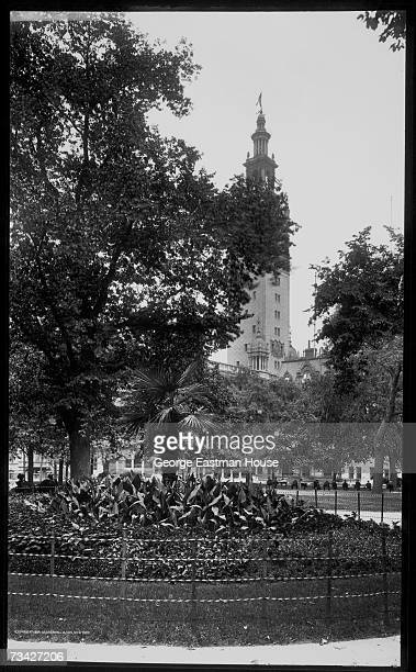 View of a palm tree and other plantings in Madison Square looking towards the tower of old Madison Square Garden New York 1904 The Garden was...