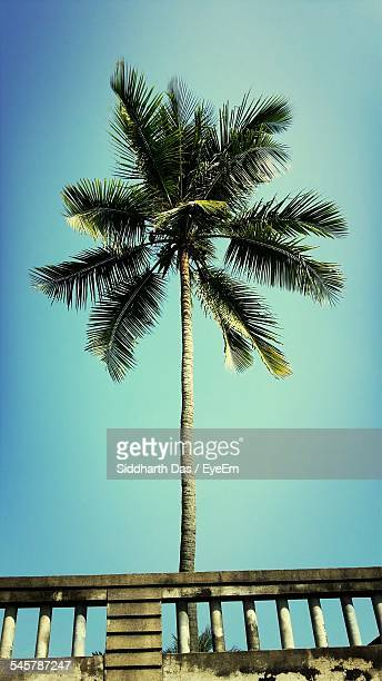 View Of A Palm Tree