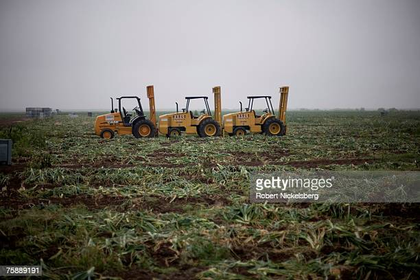 A view of a picked field after Mexican laborers harvested15 yellow onions on April 11 2007 in Rio Grande City The large yellow onions normally sell...