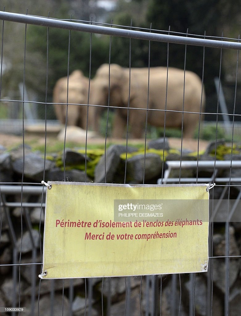 View of a placard reading ' Perimeter of isolation of the elephants enclosure' sticked on a barrier of enclosure during a demonstration to save Baby and Nepal, two elephants suffering from tuberculosis on January 6, 2013 at the 'Parc de la Tête d'Or' Zoo in Lyon, central eastern France. The two ailing middle-aged elephants that French officials have wanted put down have been given a Christmas reprieve after an appeal to President Francois Hollande and an Internet campaign to save them. AFP PHOTO/PHILIPPE DESMAZES