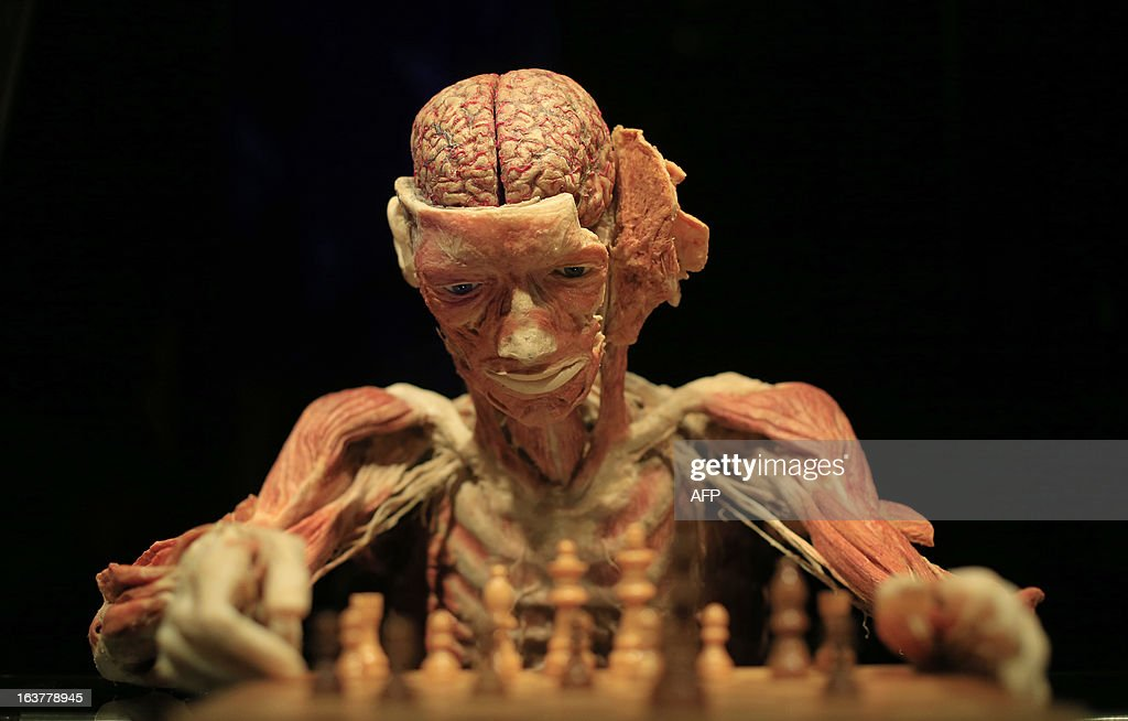 A view of a plastinated body staged as a chess player is seen at the 'Body Worlds and the Cycle of Life' (Koerperwelten und Der Zyklus des Lebens) exhibition by German anatomist Gunther von Hagens, at the Natural History Museum (Naturhistorischen Museum Wien) in Vienna on March 15, 2013. The exhibition takes places until August 11, 2013 in the Austrian capital.