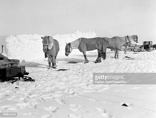 A view of a pony camp Camp 15 on the Great Ice Barrier photographed during the last tragic voyage to Antarctica by Captain Robert Falcon Scott on...