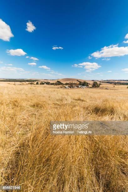 View of a rural scene in a farm, in Victoria, Australia