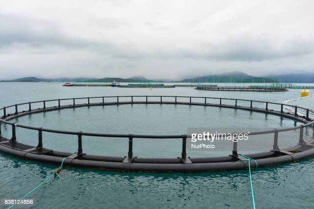A view of a salmon farmboat 'Sulatind' near Rolla and Andorja Island Norway Royal Salmon informed that its operating revenue grew by 239 per cent in...