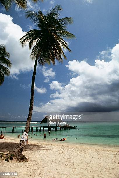 View of a scenic beach on a sunny day, Pigeon Point, Tobago, Caribbean