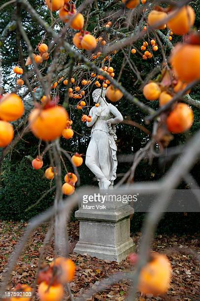 View of a statue through a persimmon tree