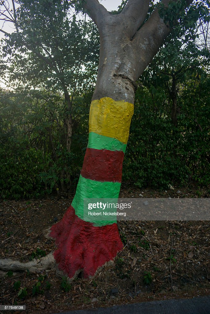 Robert nickelsberg pictures getty images - White painted tree trunks ...