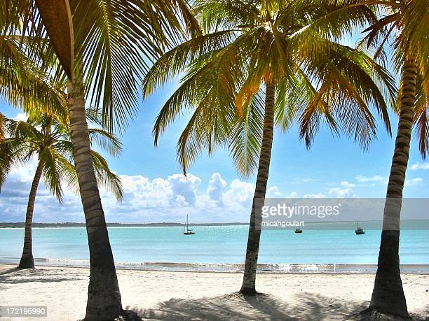 A view of a tropical beach in between Palm trees