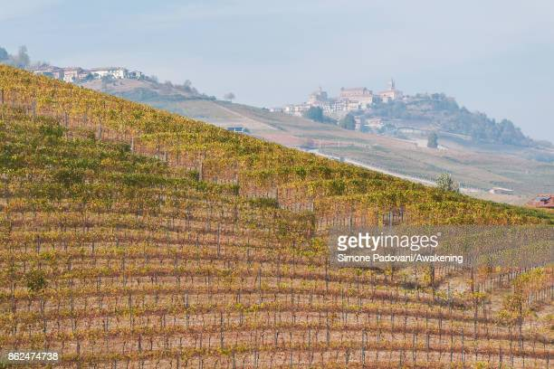 A view of a vineyard of Barolo is seen on October 17 2017 in the Barolo region Italy Because of the high summer temperatures Barolo's harvest has...