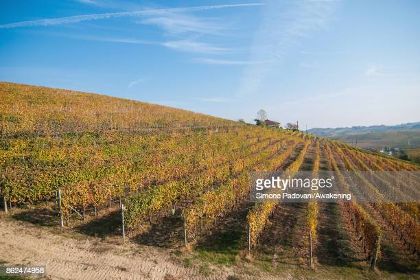 A view of a vineyard of Marchesi di Barolo is seen on October 17 2017 in the Barolo region Italy Because of the high summer temperatures Barolo's...
