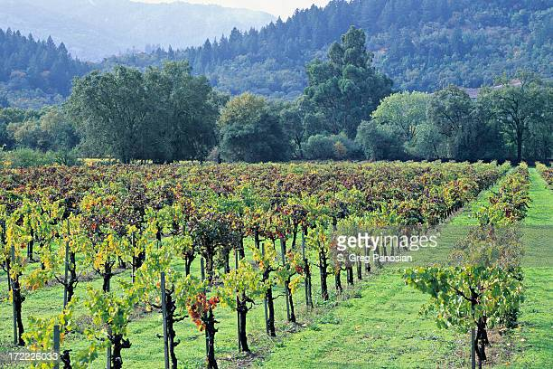 A view of a vineyard on a nice day