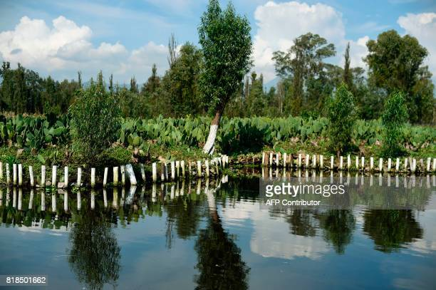 View of a water channel amid the floating gardens of Xochimilco a UNESCO World Heritage Site taken during a symposium on biodiversity and gastronomy...