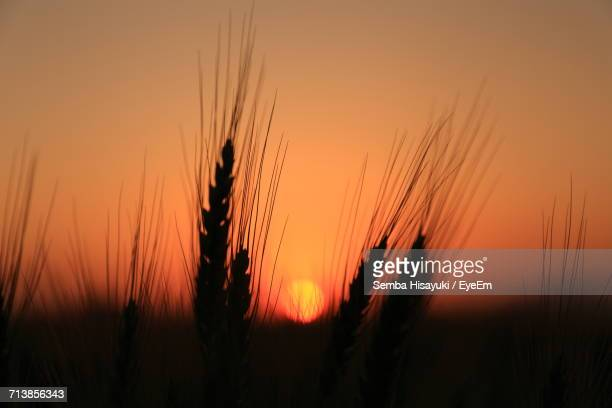 View Of Agricultural Field At Sunset