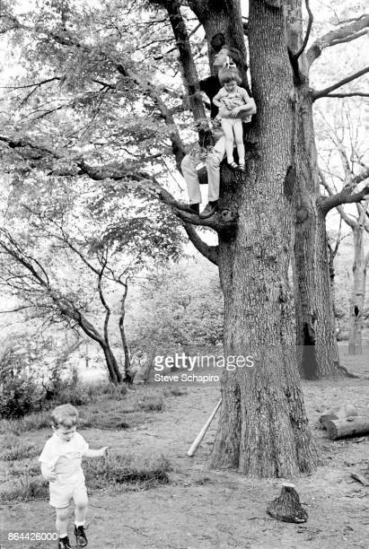 View of American actor Robert Redford and his daughter Shuana as they sit on a tree branch in Central Park New York New York 1966 His son David plays...