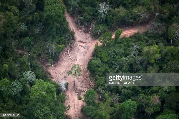 View of an illegal felling area in the Amazon jungle during an overflight by Greenpeace activists over areas of illegal exploitation of timber as...