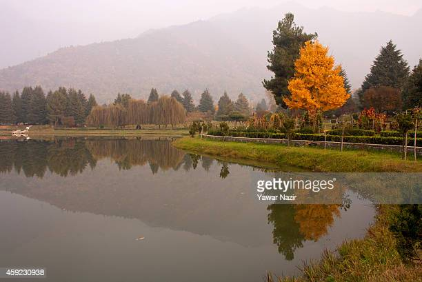 A view of autumn trees in Botanical garden during the autumn season on November 18 2014 in Srinagar the summer capital of Indian administered Kashmir...