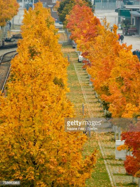 View Of Autumn Trees In City