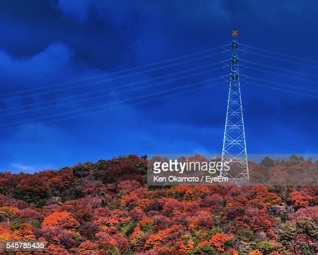 View Of Autumn Trees With Power Line