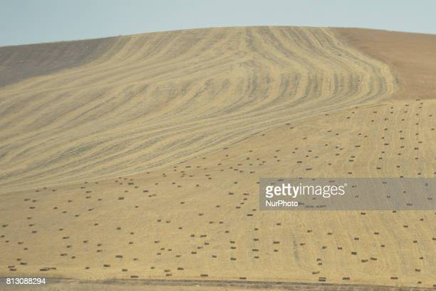 A view of bails of hay near Meknes On Friday June 30 in Meknes Morocco