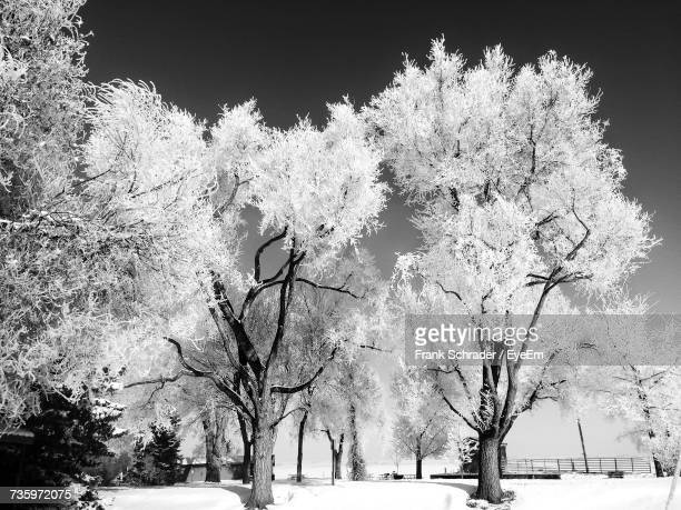View Of Bare Trees Against Clear Sky