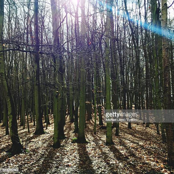 View Of Bare Trees In The Forest