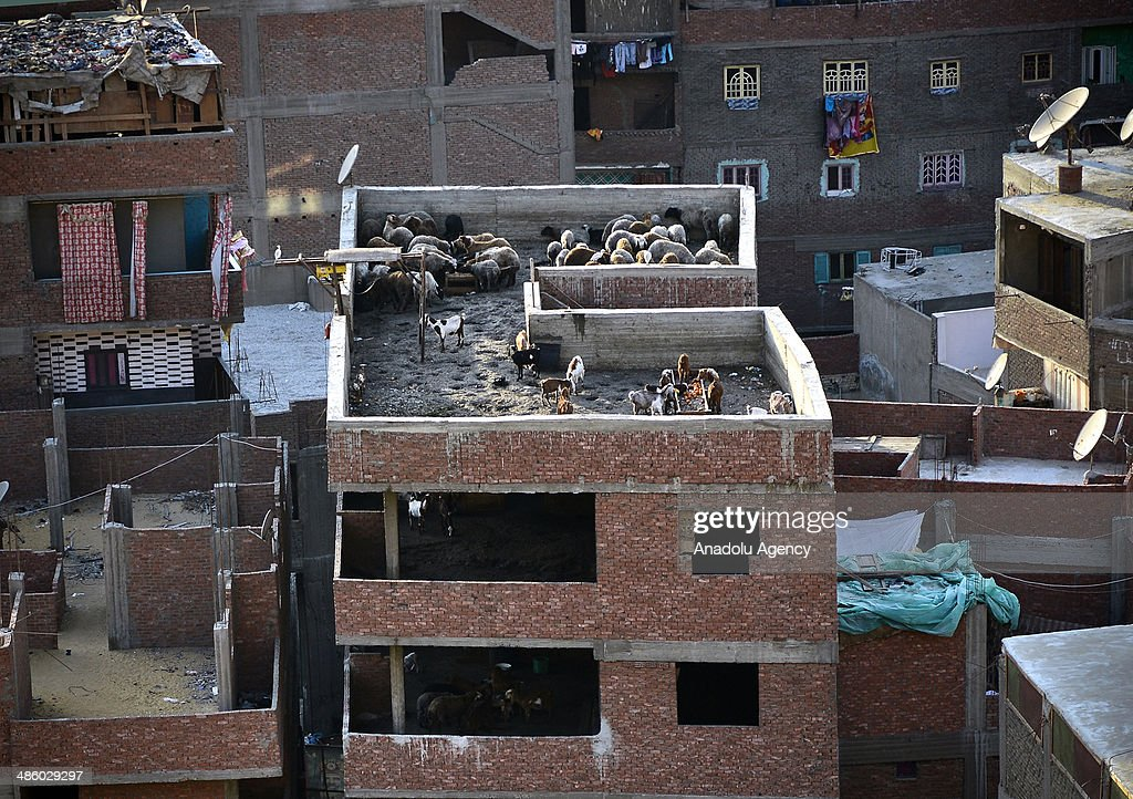 A view of barn on the roof, unplanned urbanization and settlements in Cairo, Egypt has given rise on April 21, 2014. Unplanned and improper urbanization causes problems such as overcrowdedness, contaminated water.