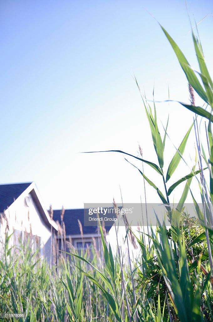 A view of beach houses through sea grass. : Stock Photo