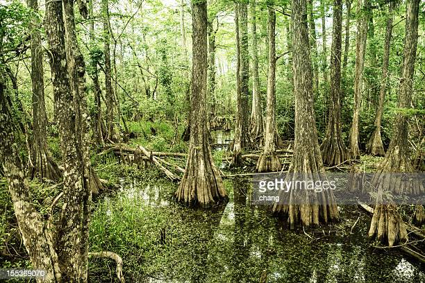 View of Big Cypress National Preserve