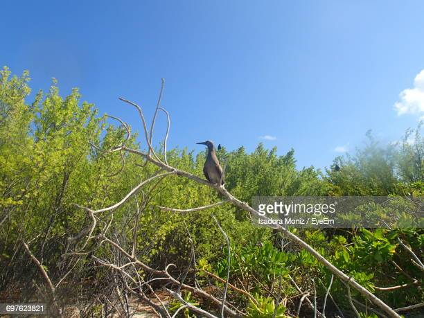 View Of Bird Against Clear Blue Sky