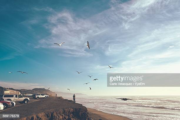 View Of Birds Flying Over Beach