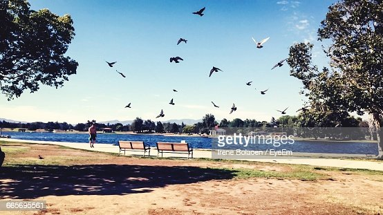 View Of Birds Flying Over River At Park