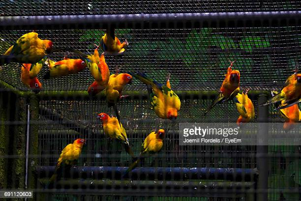 View Of Birds In Cage