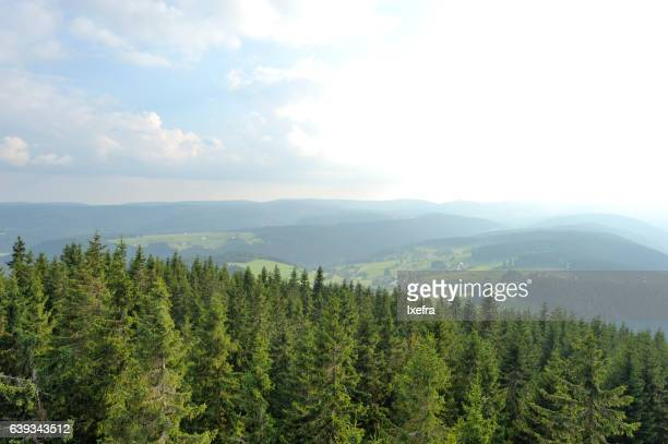 A view of Black Forest landscape