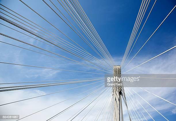 View of bridge cables