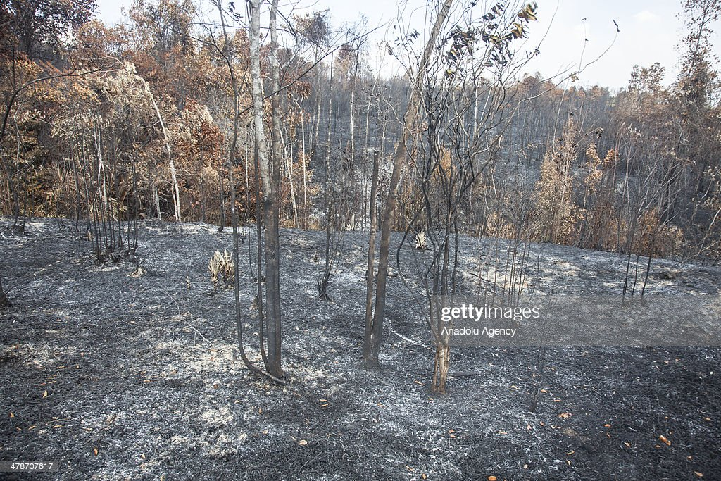 A view of burnt forest scenery on March 14, 2014 in Bintan Island, Riau, Indonesia. Smoke haze from forest fires that still covered the Riau province causing many schools were closed and sick people breathing.
