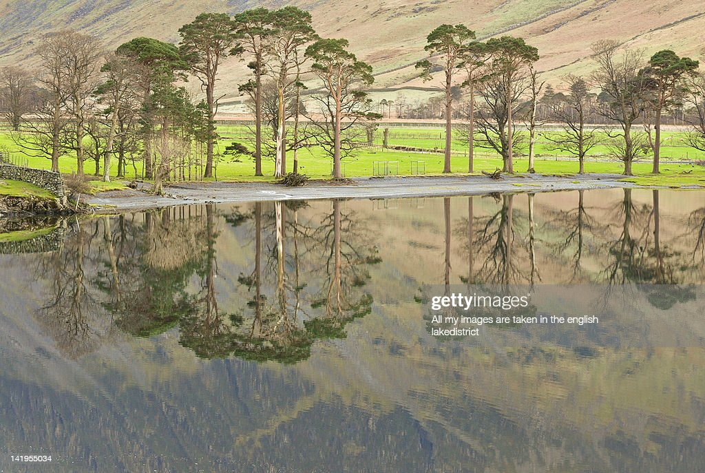 View of Buttermere pines