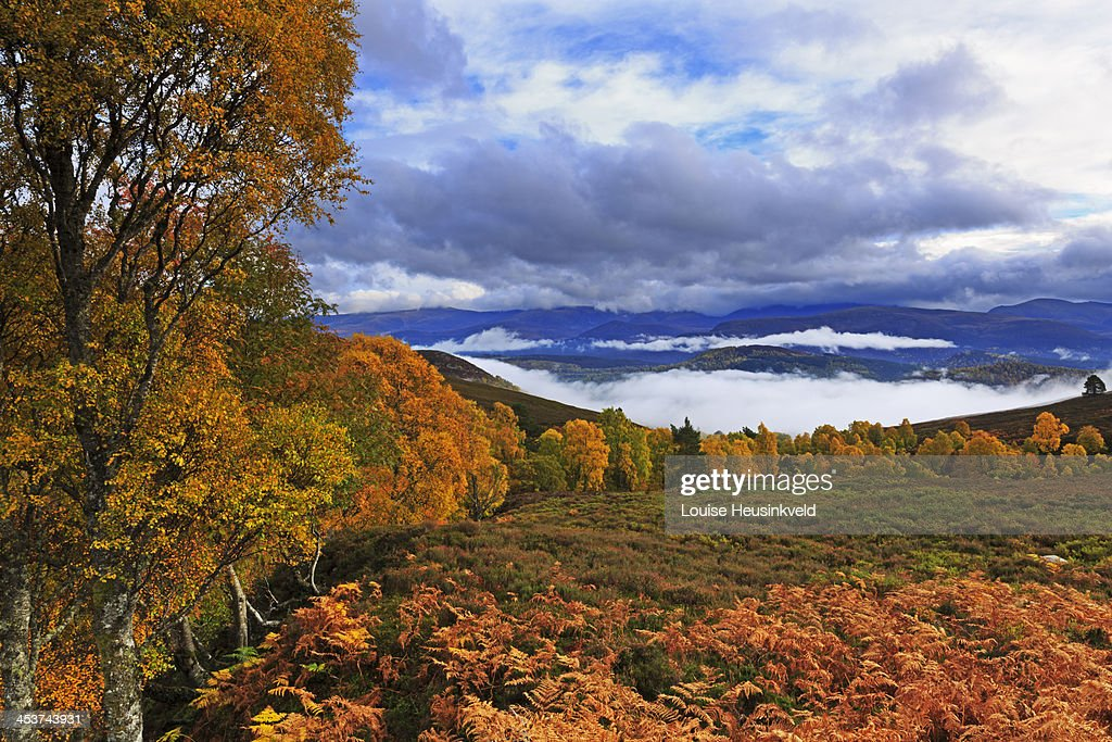 View of Cairngorms National Park in autumn