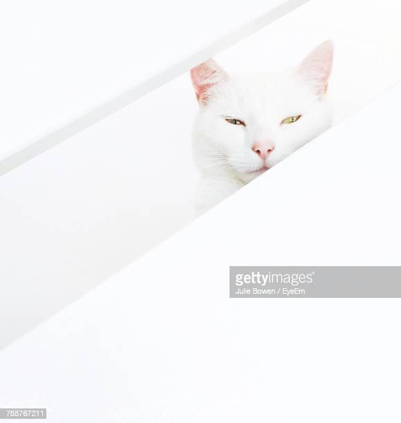 View Of Cat On White Wall