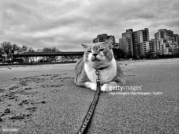 View Of Cat Sitting On Beach