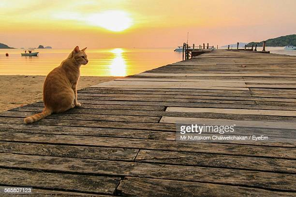 View Of Cat Sitting On Pier