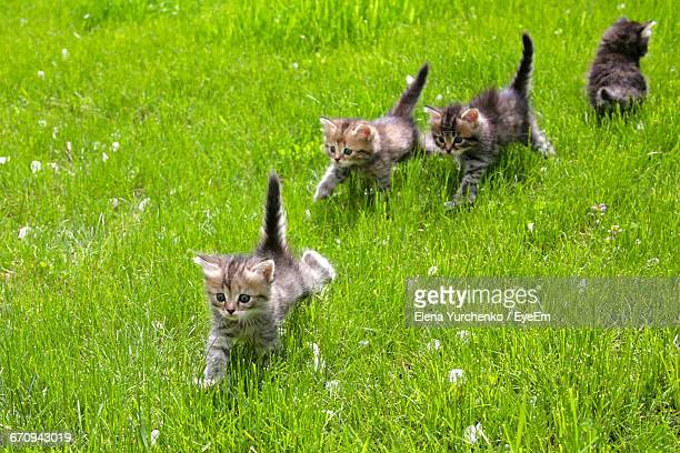 View Of Cats On Grassland