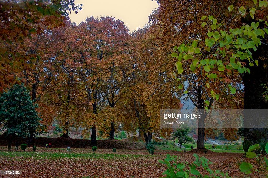 autumn season india essay